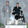 "Ch. Rockmere's Bowen by the Sea winning a major with handler Rick Krieger.  This ""Sam"" son was also Best Junior in Futurity at the PWDCA National Specialty in September 2011.  He was bred by Linda Carey."