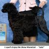 Ch. C-Quel's Enjoy the Show MaineSail - - owner handled to an All Breed Best Puppy in Show award by Sarah Turgeon! She is a litter sister to Griffin.