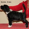 Bonnie stacked at 8 weeks